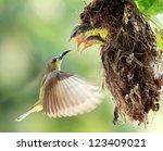 Sun Bird Flying Feeding New...