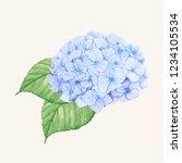 hand drawn hydrangea flower...   Shutterstock .eps vector #1234105534