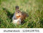 concept of animals in wildlife. ... | Shutterstock . vector #1234139701