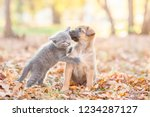 Stock photo cute puppy kisses a kitten on autumn leaves at sunset 1234287127