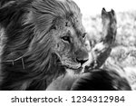 black and white portrait of a... | Shutterstock . vector #1234312984