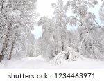 snowy road through winter forest | Shutterstock . vector #1234463971