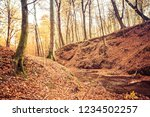a stream in a beech forest in... | Shutterstock . vector #1234502257