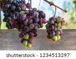 bunch of overripe green and red ... | Shutterstock . vector #1234513297