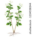 blooming raspberry bush with... | Shutterstock .eps vector #1234538344