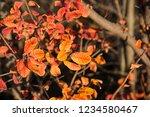 golden autumn in the odessa city   Shutterstock . vector #1234580467