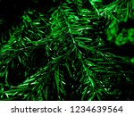 dark green christmas tree  ... | Shutterstock . vector #1234639564