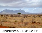 solitary tree landscape in...   Shutterstock . vector #1234655341