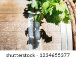 grape leaves on the background... | Shutterstock . vector #1234655377