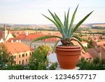 agave in the pot against city... | Shutterstock . vector #1234657717