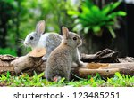Stock photo two rabbits bunny in the garden 123485251