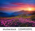 charming pink flower... | Shutterstock . vector #1234933591