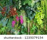 wall of  vegetation green color ...   Shutterstock . vector #1235079154