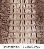 beige   brown crocodile...   Shutterstock . vector #1235083927