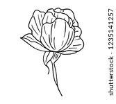 flower peony illustration | Shutterstock . vector #1235141257