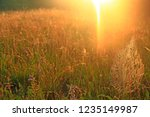 big cobweb among blades in... | Shutterstock . vector #1235149987