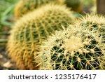 a sharp cactus with a sharp... | Shutterstock . vector #1235176417