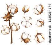 watercolor hand drawn cotton... | Shutterstock . vector #1235254174