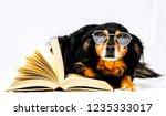 one intelligent black dog... | Shutterstock . vector #1235333017