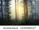 sunset light in misty forest | Shutterstock . vector #1235400127