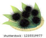 sea urchins on a bamboo basket  ... | Shutterstock .eps vector #1235519977