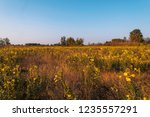 uncultivated field in the... | Shutterstock . vector #1235557291