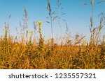 uncultivated field in the... | Shutterstock . vector #1235557321