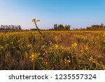 uncultivated field in the... | Shutterstock . vector #1235557324