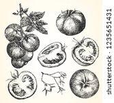 hand drawn illustration of... | Shutterstock .eps vector #1235651431