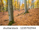 beech forest in autumn | Shutterstock . vector #1235702944