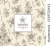 background with manuka  leaves... | Shutterstock .eps vector #1235722411
