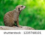 side view closeup of brown...   Shutterstock . vector #1235768101