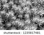 plant leaf background | Shutterstock . vector #1235817481