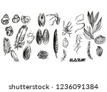 hand drawn ink decorative beach ... | Shutterstock . vector #1236091384