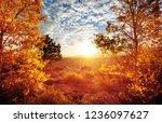 autumn scene in yellow tones | Shutterstock . vector #1236097627