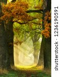 footpath through avenue of oak...   Shutterstock . vector #1236190591