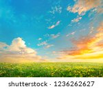 spring field landscape with... | Shutterstock . vector #1236262627