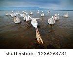 Bird Hunting In The Water....
