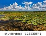 a beautiful lake in danube... | Shutterstock . vector #123630541