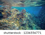 sardine school in coral reef....   Shutterstock . vector #1236556771