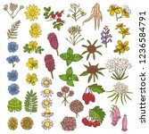 colored set of medicinal plant... | Shutterstock .eps vector #1236584791