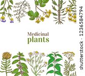 colored template with medicinal ... | Shutterstock .eps vector #1236584794