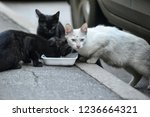 three stray cats eat outside | Shutterstock . vector #1236664321