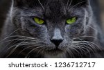 black cat with glowing green... | Shutterstock . vector #1236712717