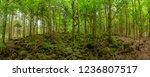 inside the lush black forest ...   Shutterstock . vector #1236807517