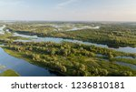 riverside with many branch and... | Shutterstock . vector #1236810181