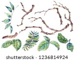 watercolor set of branches and... | Shutterstock . vector #1236814924