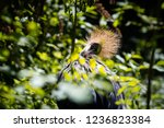 grey crowned crane  | Shutterstock . vector #1236823384