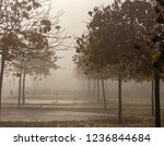 background. morning fog on the... | Shutterstock . vector #1236844684