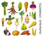 root vegetables or veggie tuber ... | Shutterstock .eps vector #1236863731